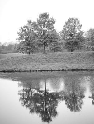 Lagoon (II)