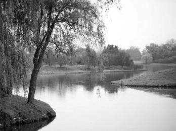 Lagoon (I)