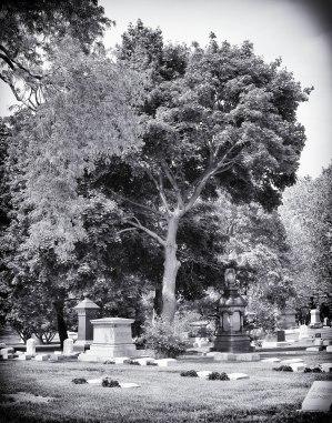 Graceland Cemetery (III)
