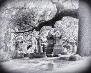 Graceland Cemetery (IV)