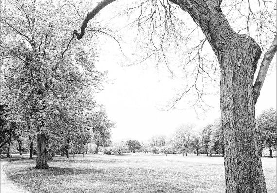 Jackson Park, Spring 2015 (I)