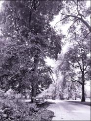 Bench in Jackson Park
