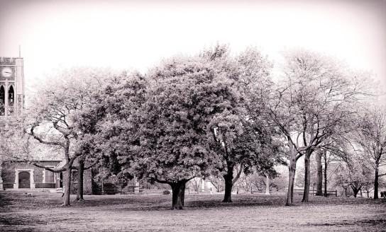 Trees at Waveland